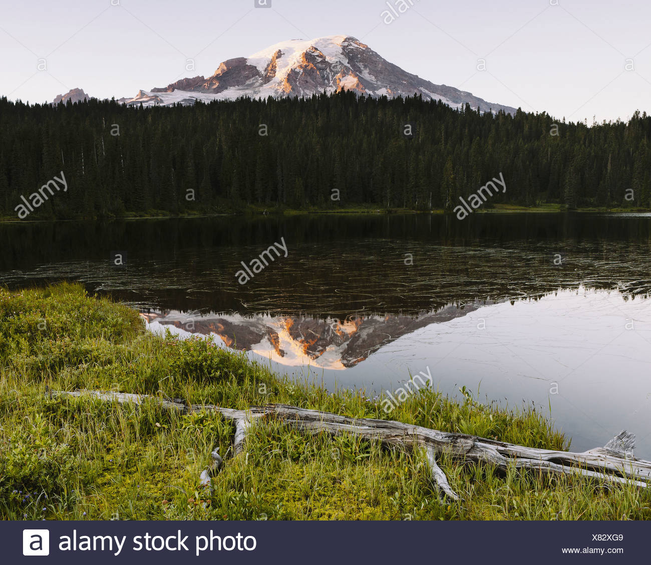 View of Mount Rainier from Reflection Lakes at dawn in Mount Rainier national park - Stock Image