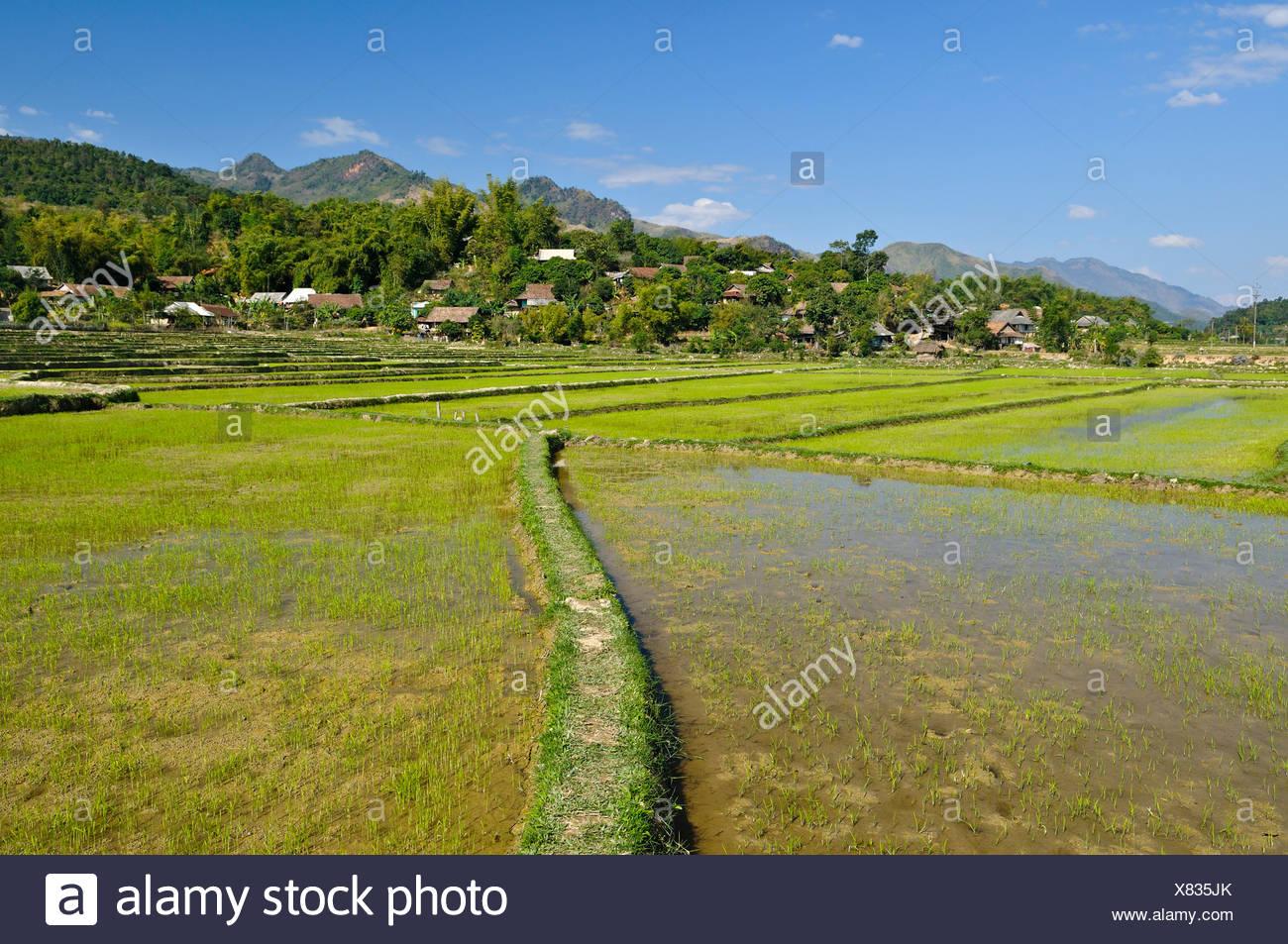 Mai Chau Valley, Vietnam, Asia - Stock Image