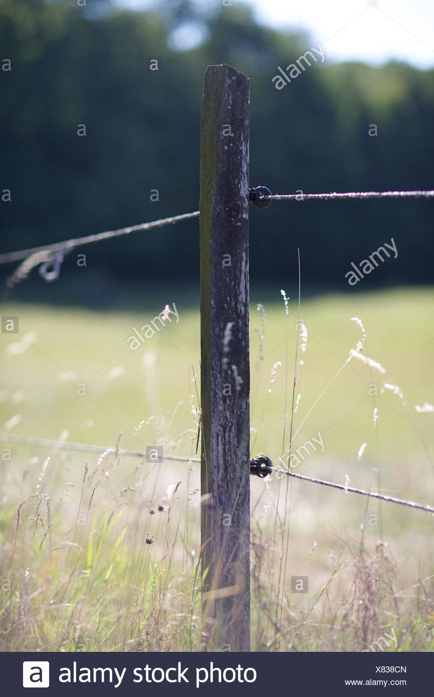 barb wire fence at field. straw, protection, post, wood. - Stock Image