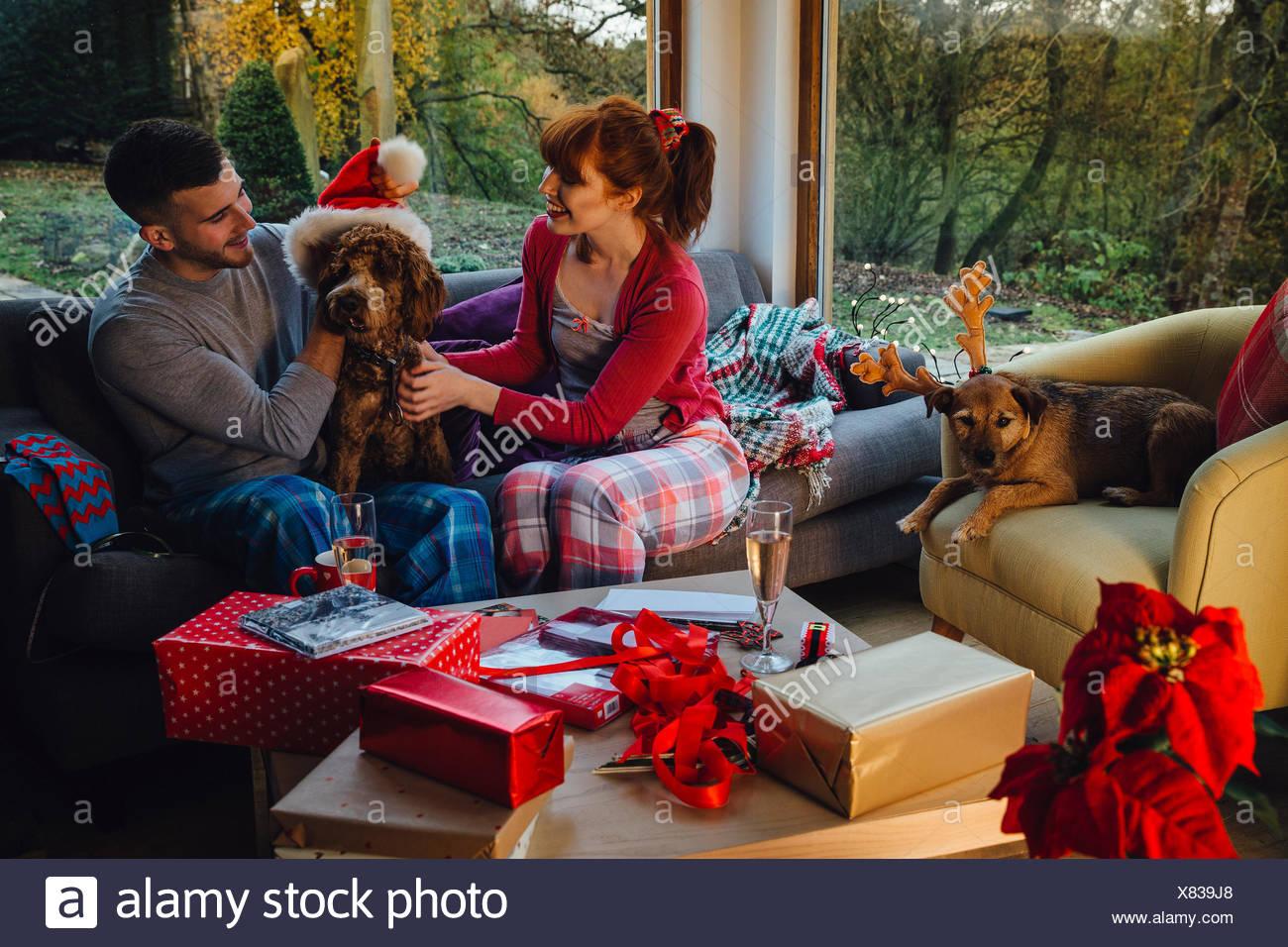 Pets at Christmas Stock Photo