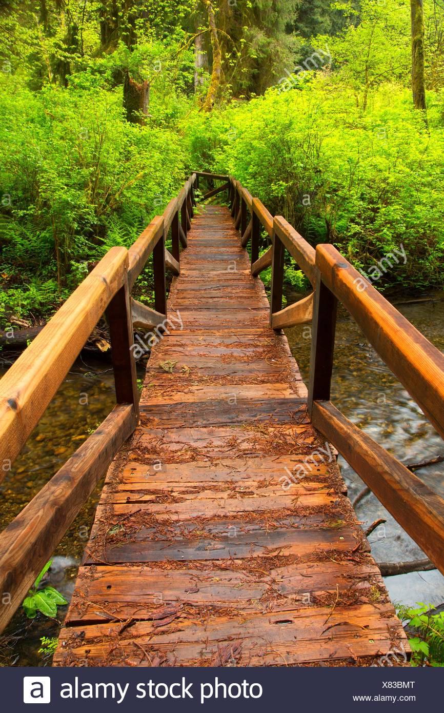 Bridge on Prairie Creek Trail over Prairie Creek, Prairie Creek Redwoods State Park, Redwood National Park, California. - Stock Image