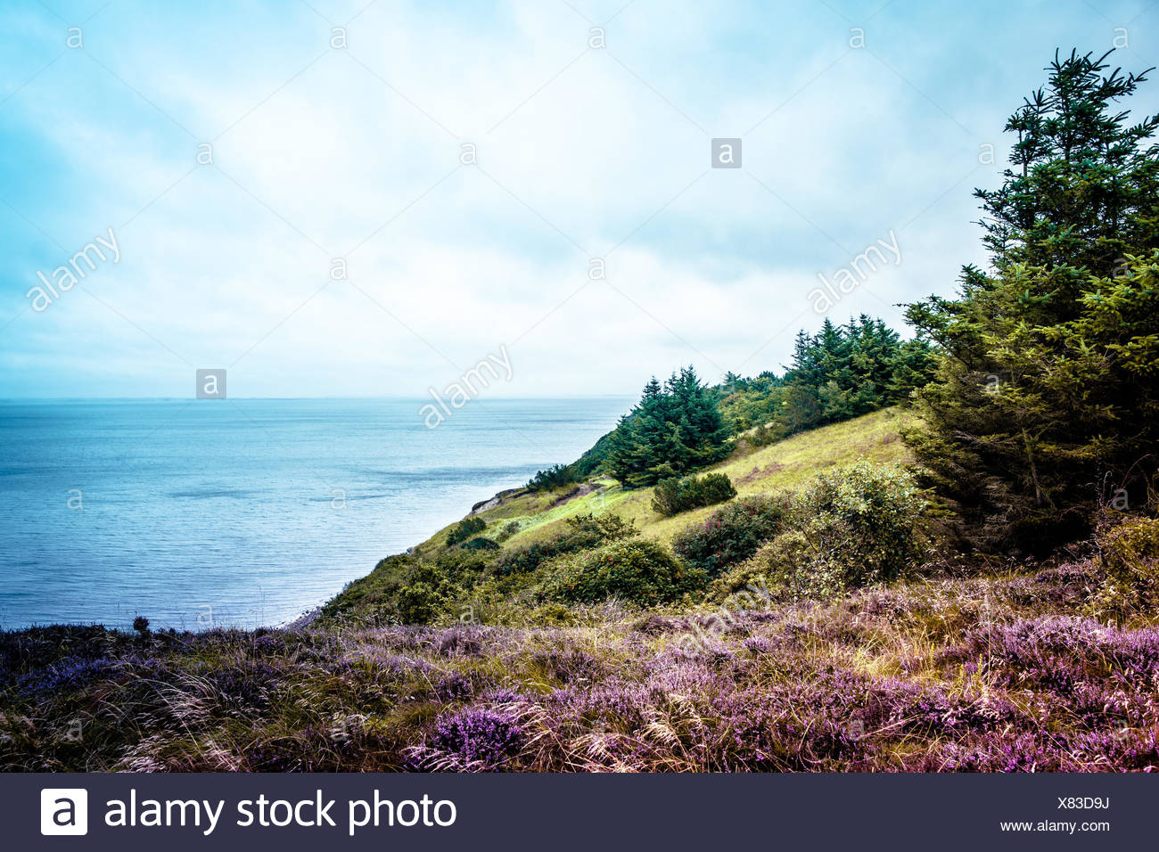 Heather fields and cloudy weatherby the ocean - Stock Image