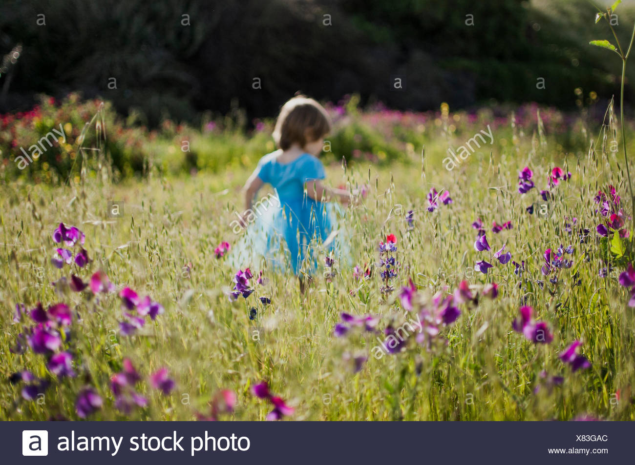 little girl running in a field of flowers - Stock Image