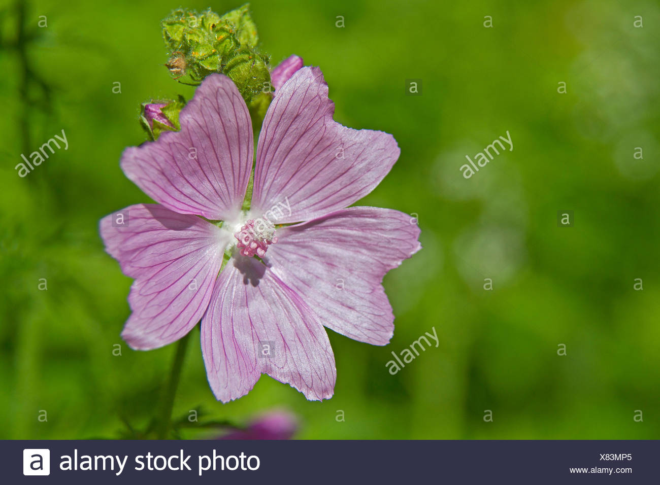 macro, close-up, macro admission, close up view, detail, flower, plant, bloom, Stock Photo