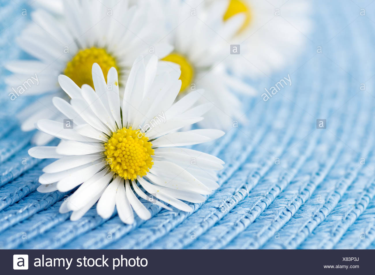 Flower Plant Flowers Marguerite Petal Daisy Camomile Blue Tea Health