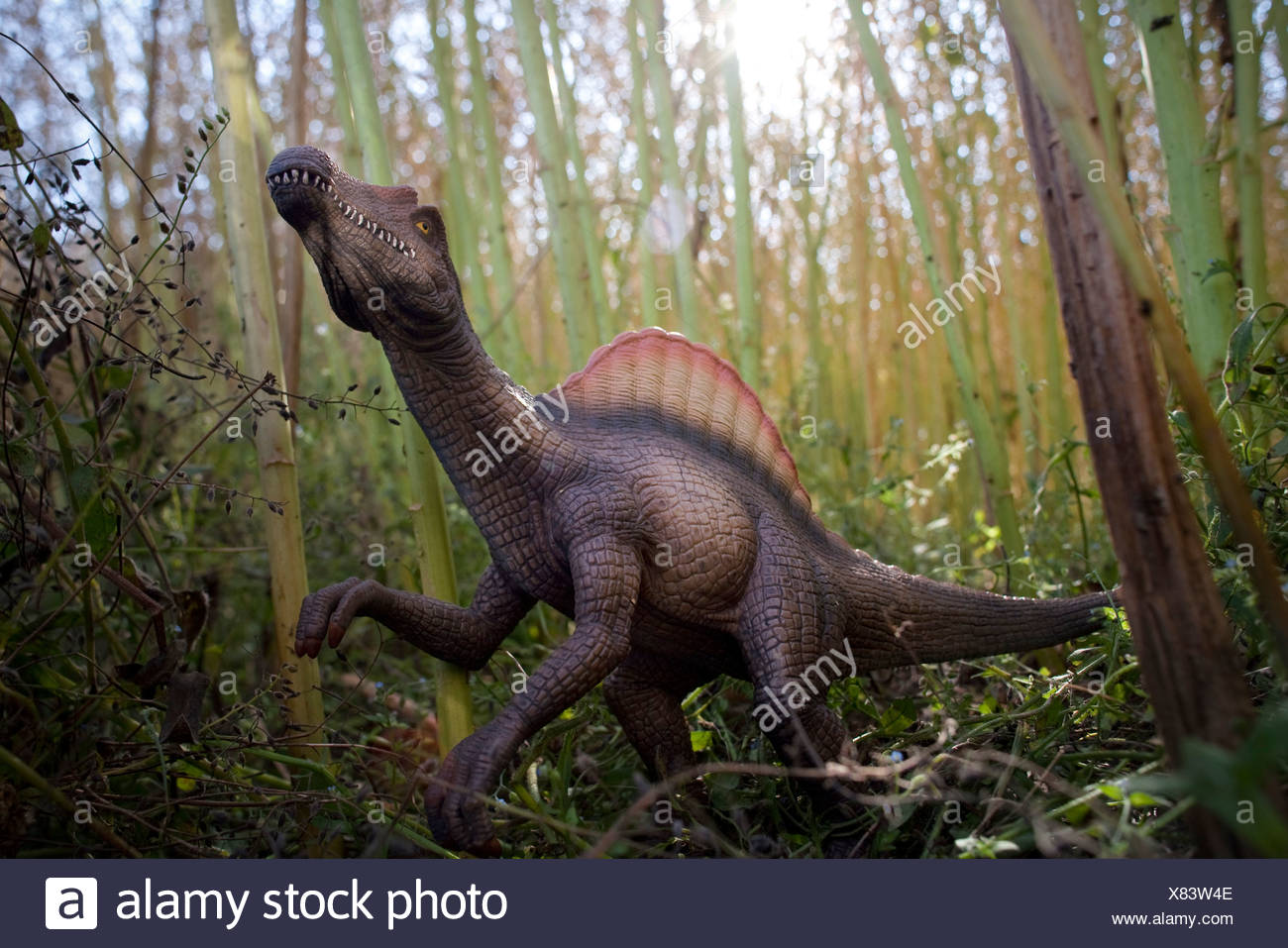 Toy spinosaurus amidst bamboo stalks - Stock Image