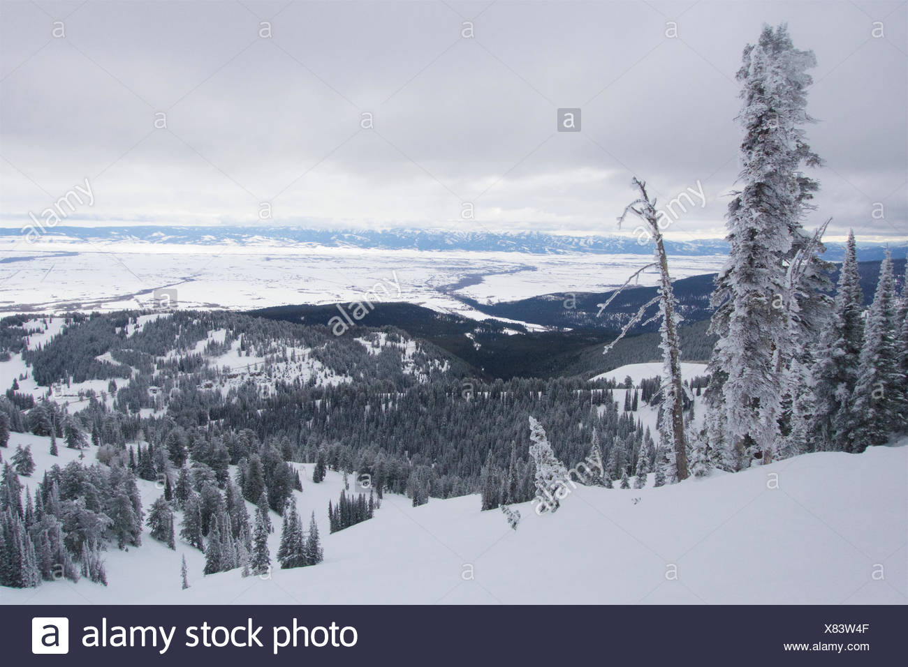Winter scene with snow and rime covered trees in the mountains. - Stock Image