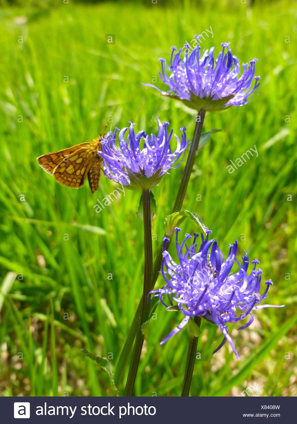 Germany, Upper Bavaria, Pupplinger meadow near Wolfratshausen - Stock Image
