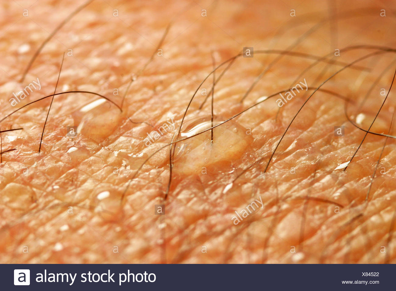 pores human stock photos pores human stock images alamy pores human stock photos pores human stock images alamy
