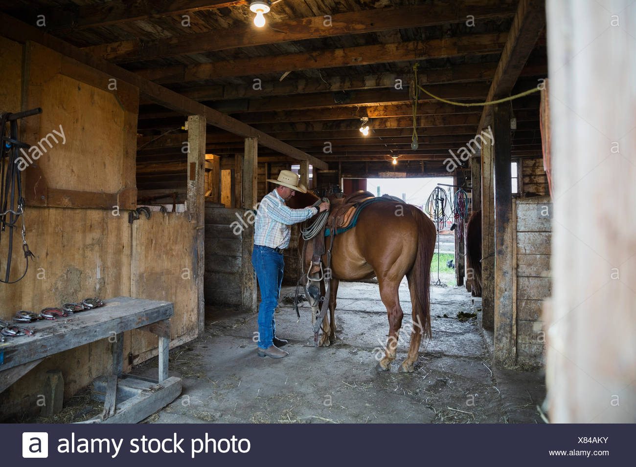 Rancher tacking up horse in barn - Stock Image