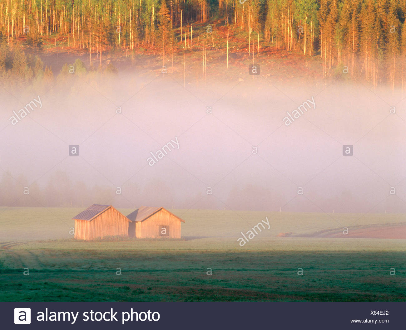 Barns on a field in a mysty summer morning. Vasterbotten. Sweden - Stock Image