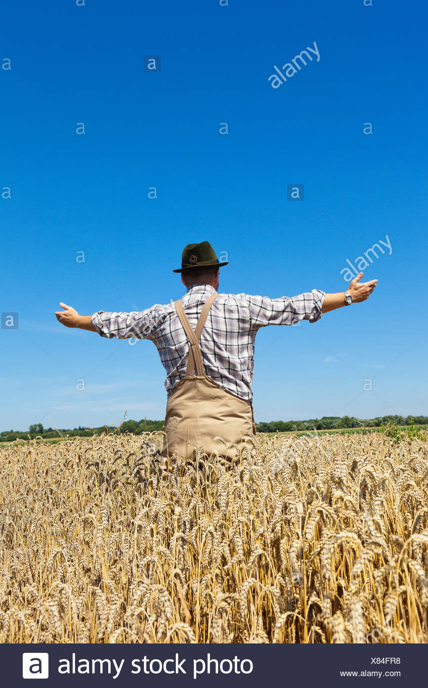 bread wheat, cultivated wheat (Triticum aestivum), farmer standing in his mature wheat contently spreading his arms, Germany - Stock Image