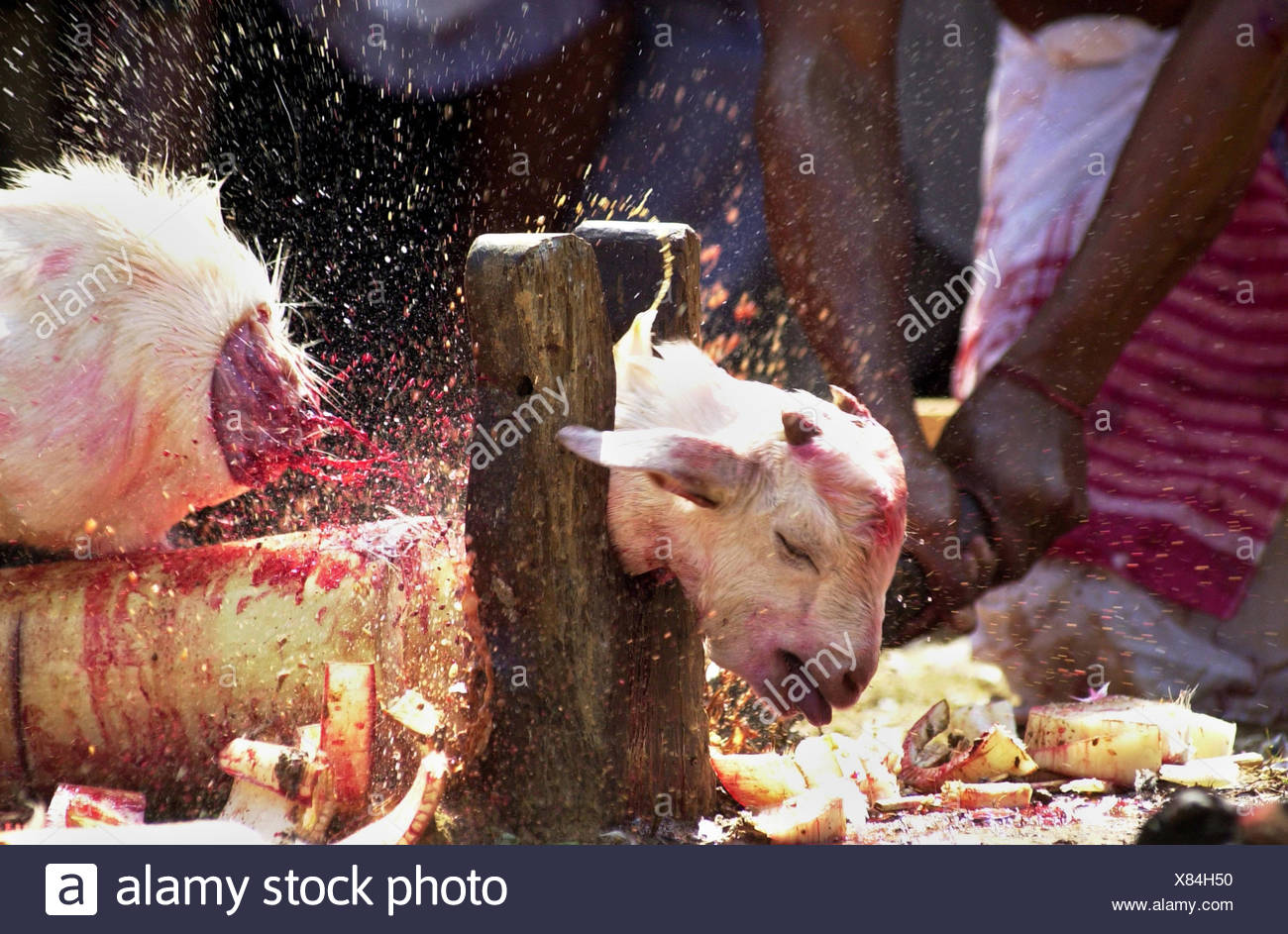 Slaughter house - Stock Image