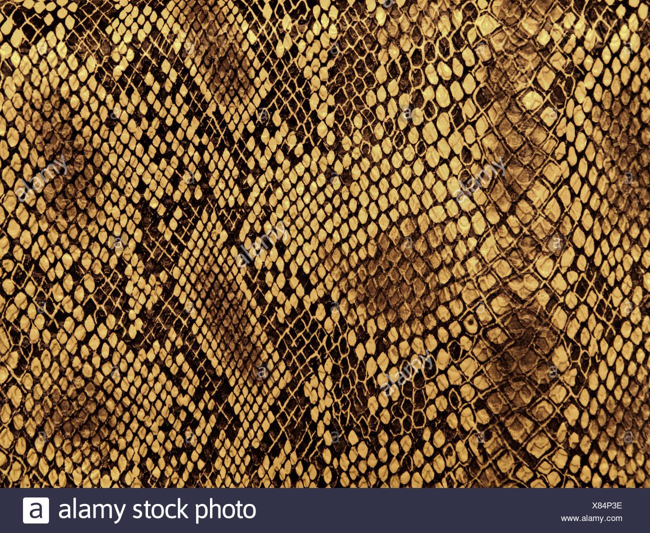 skin snake pattern - Stock Image