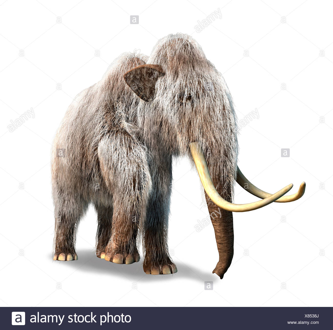 Mammoth Deutsch