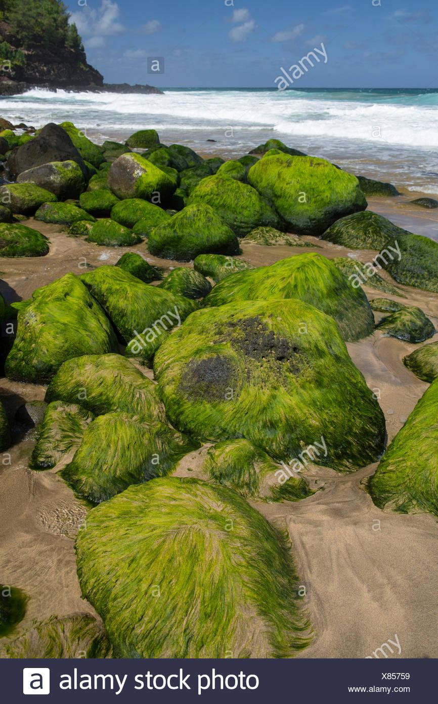 Kauai,Hanakapiai Beach,Well Pali,sea,shore,algae,stones,Kauai,USA,Hawaii,America, - Stock Image