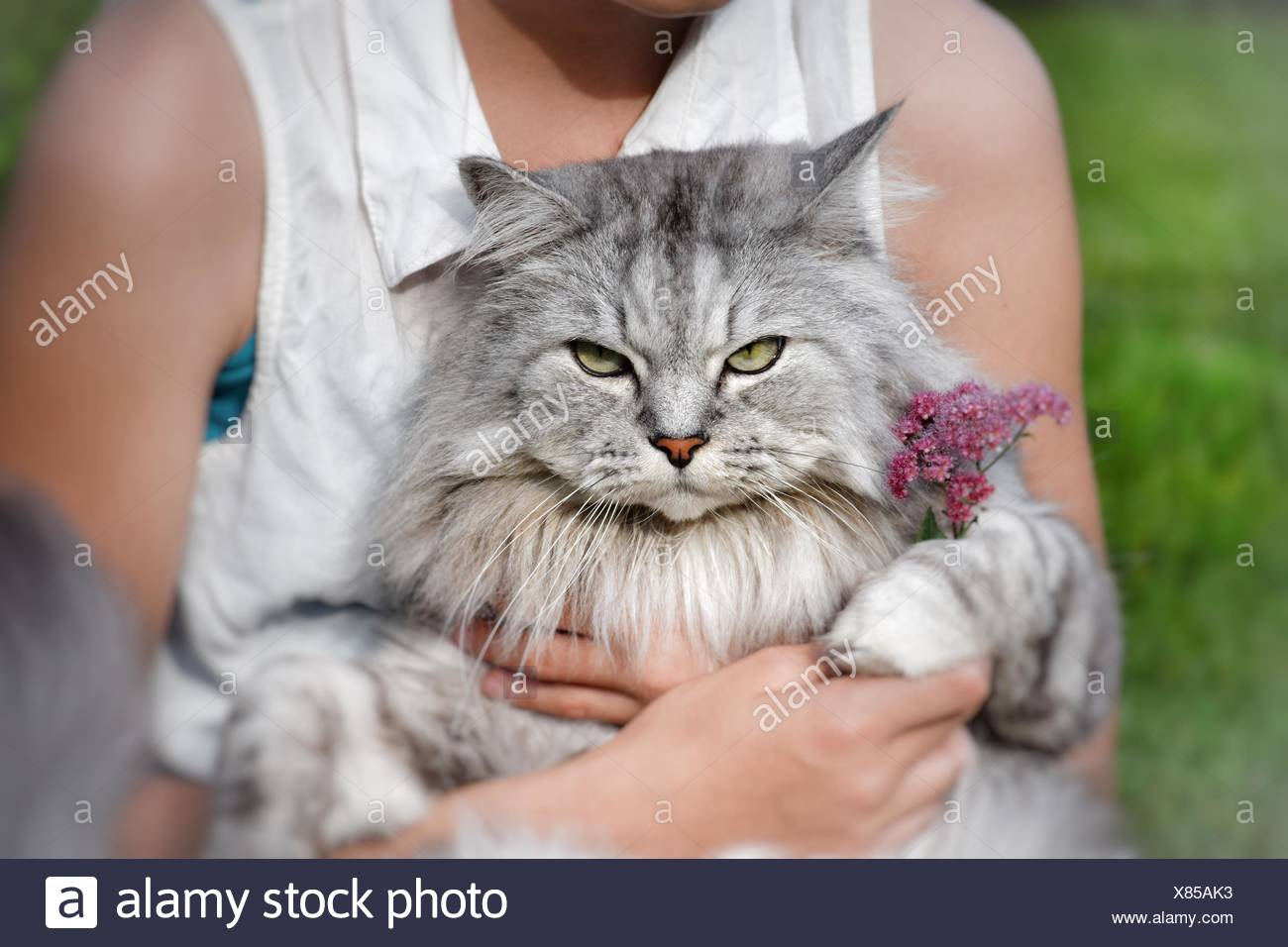 Teenage Girl sitting with a cat on her lap - Stock Image