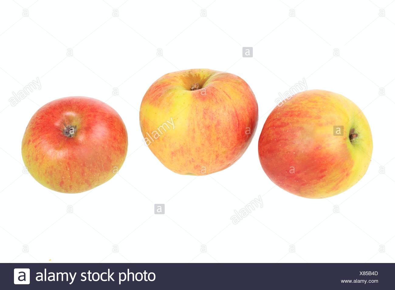 Apples, Rheinische Schafsnase variety, traditional sort for producing cider Stock Photo