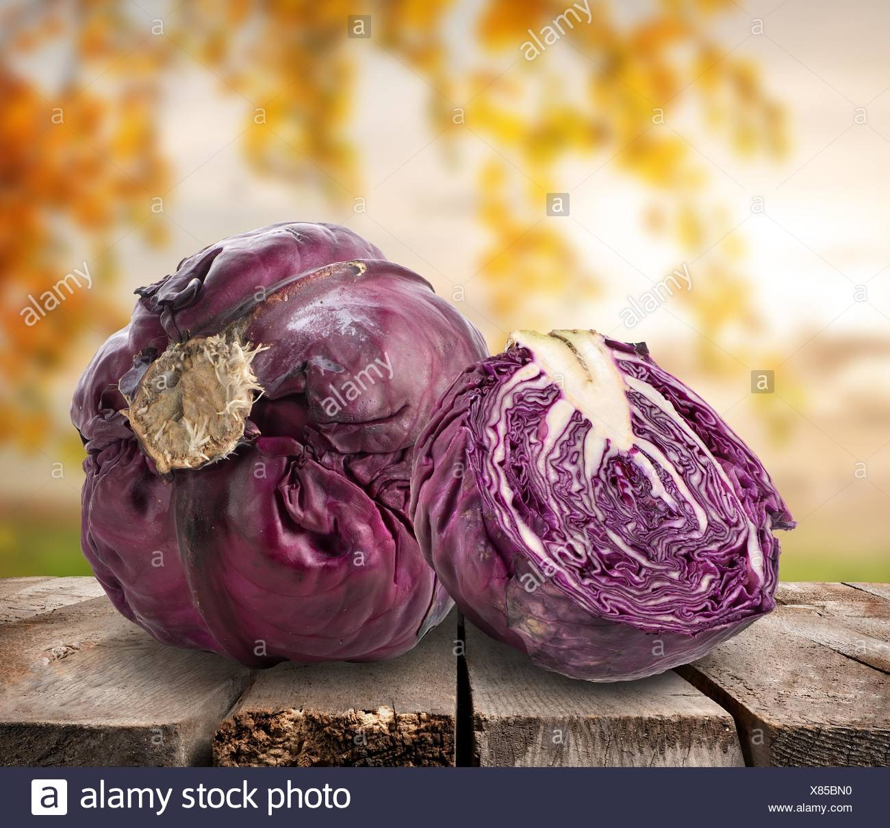 Purple cabbage on table on a nature background. - Stock Image
