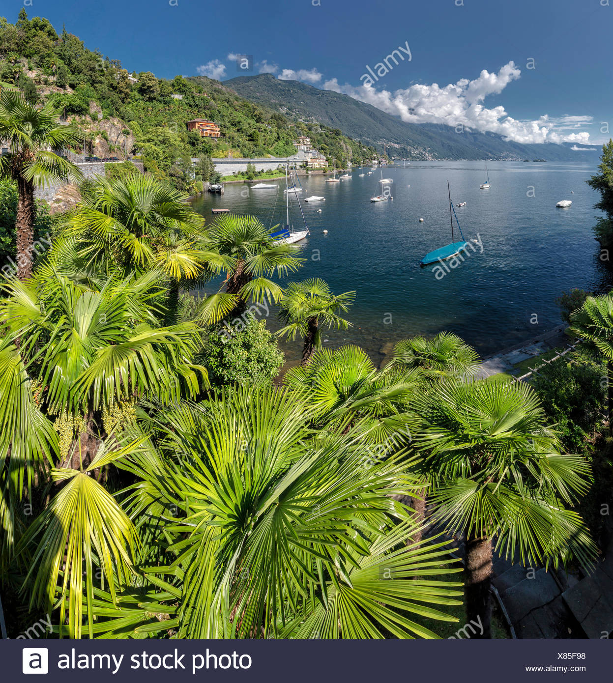 Switzerland, Europe, Ascona, Ticino, Secluded bay, palm trees, Lake Maggiore, landscape, water, trees, summer, mountains, lake, - Stock Image