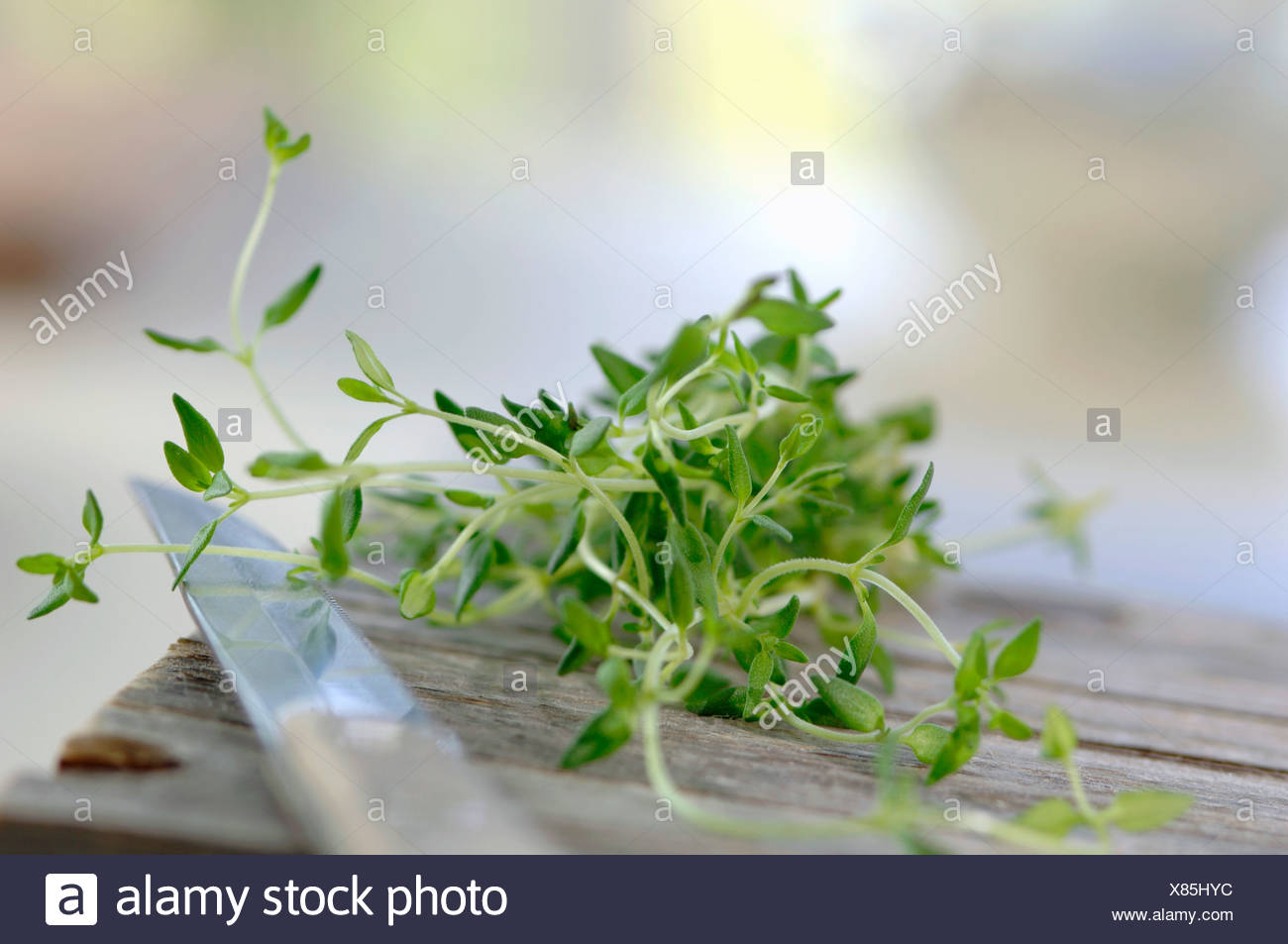 Thyme on chopping board - Stock Image