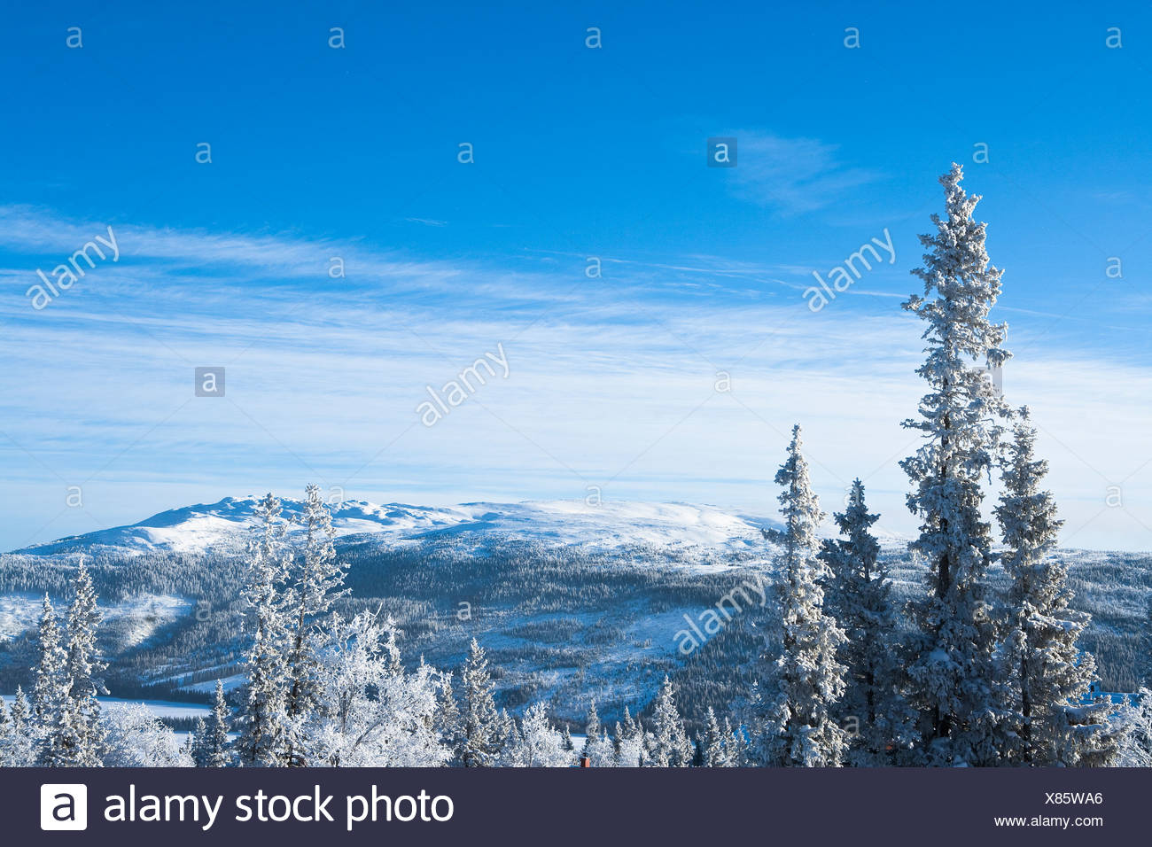 Winter landscape with forest - Stock Image