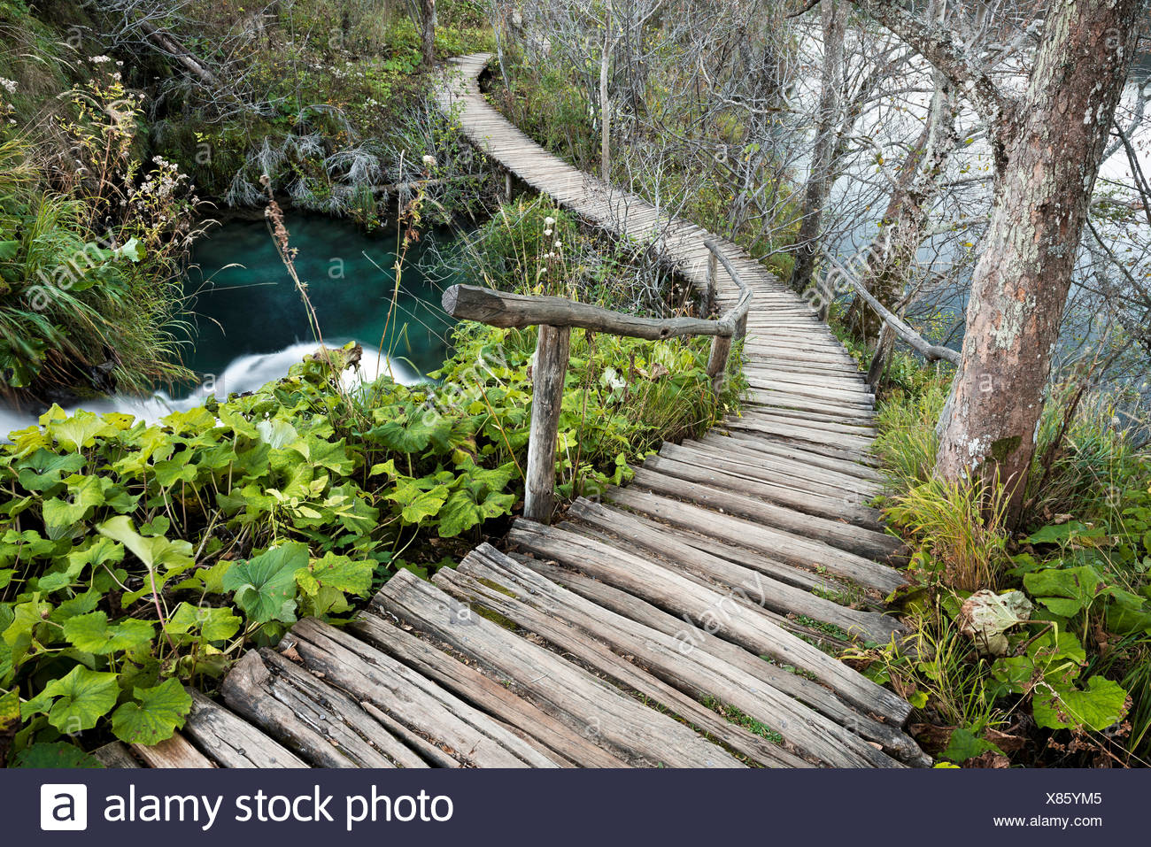 Ways, forest, Woodland, water, lake, tree, path, beam, plants, green, turquoise, nature, dream, winding, - Stock Image