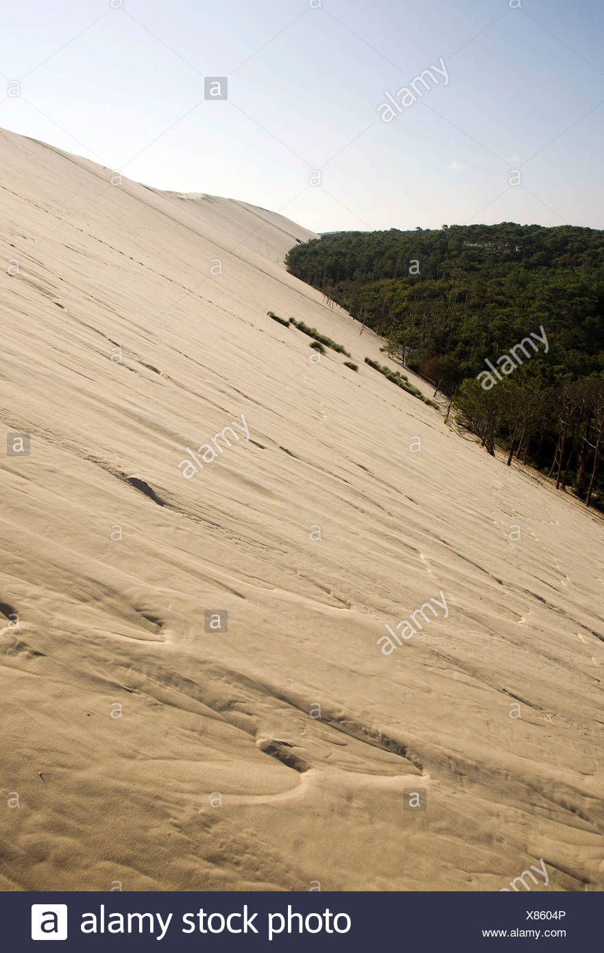 Pine forest at the dune of Pyla, Dune du Pilat, biggest dune in Europe on the Atlantic coast near Arcachon, Departement Gironde Stock Photo