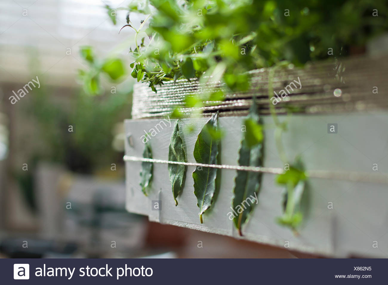 hand made decorated box with herbs Stock Photo