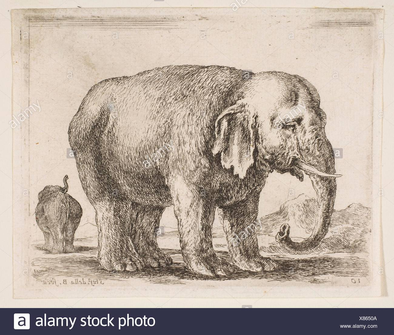 Plate 10: elephant, from 'Various animals' (Diversi animali). Series/Portfolio: 'Various animals' (Diversi animali); Artist: Stefano della Bella - Stock Image