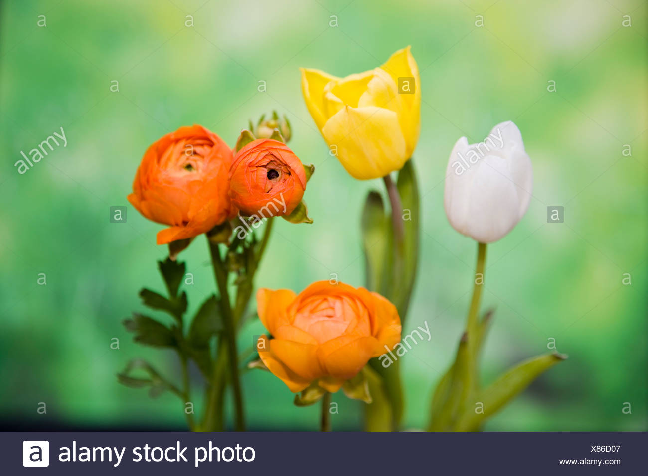 Various types of flowers - Stock Image