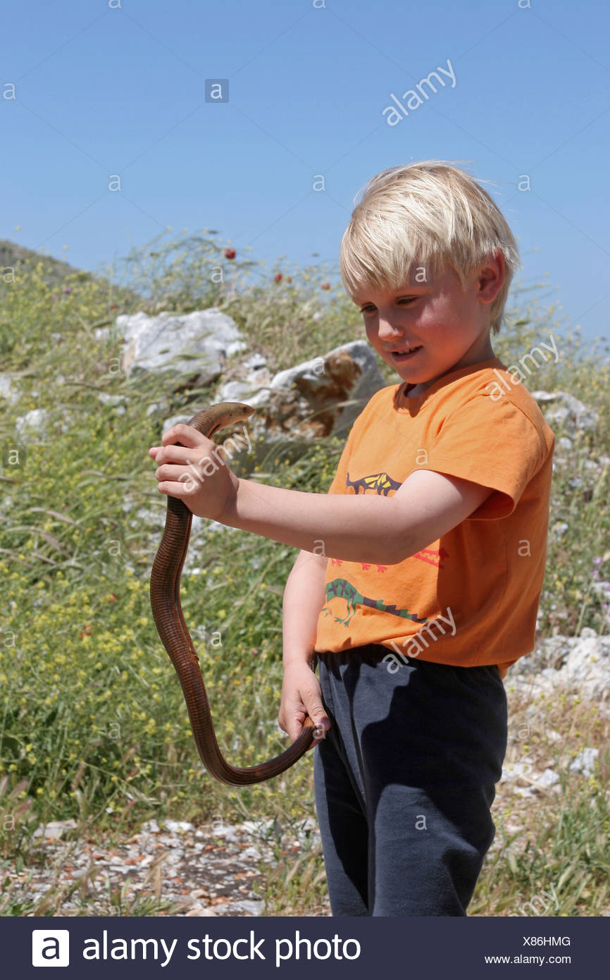 European glass lizard, armored glass lizard (Ophisaurus apodus, Pseudopus apodus), single animal in the hands of a small boy, Greece - Stock Image