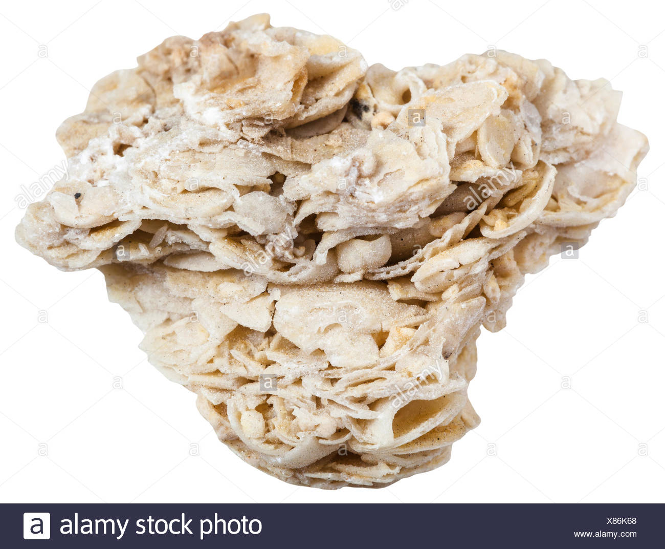 coquina limestone (shell rock) mineral isolated - Stock Image