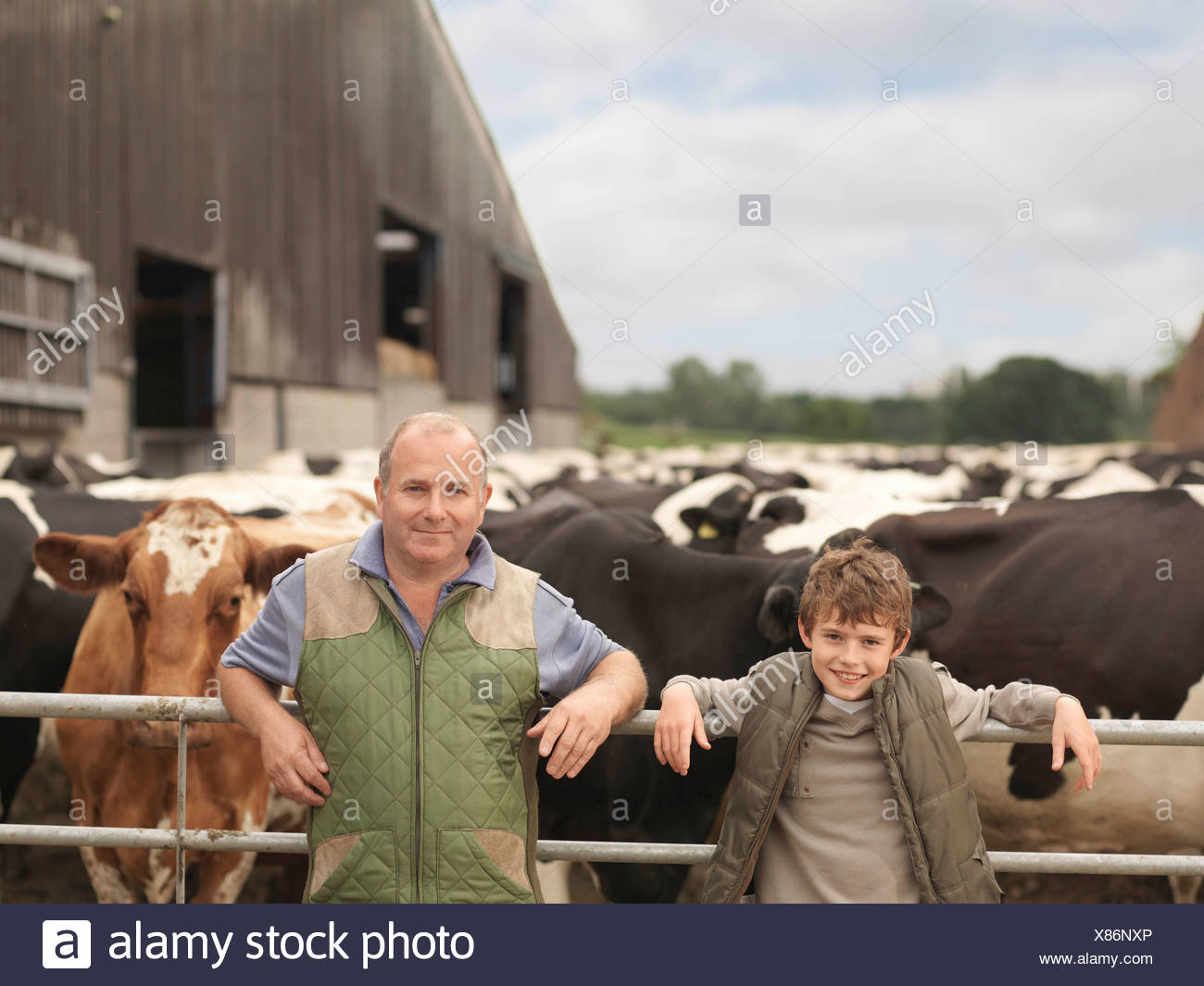 Farmer And Son With Cows - Stock Image