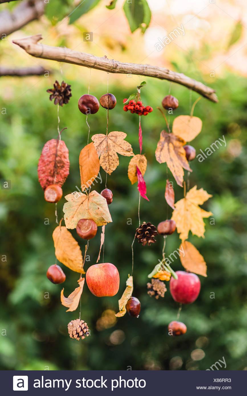 Tree, autumnal decoration, hang, - Stock Image