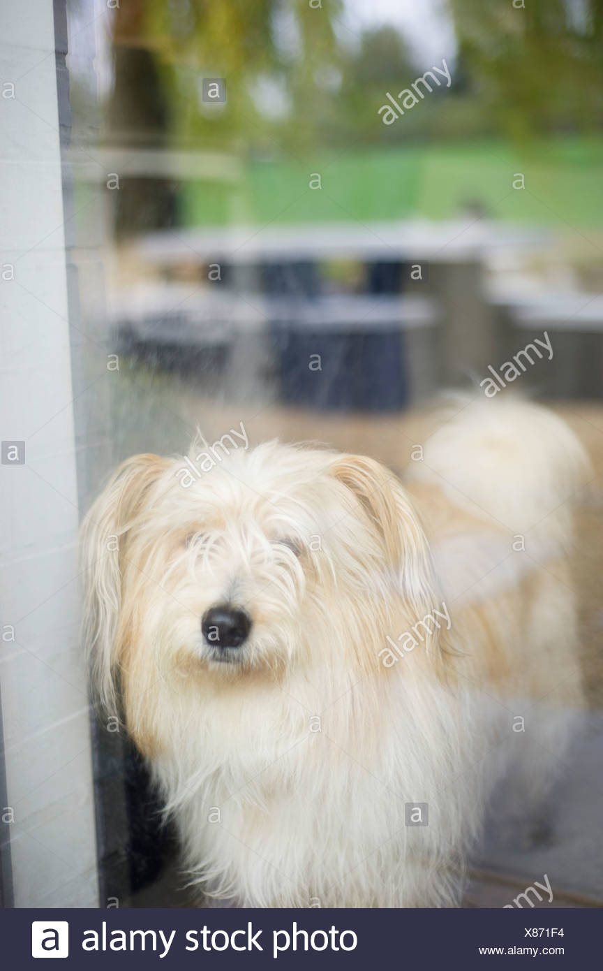 Close-up of a hairy dog at home - Stock Image