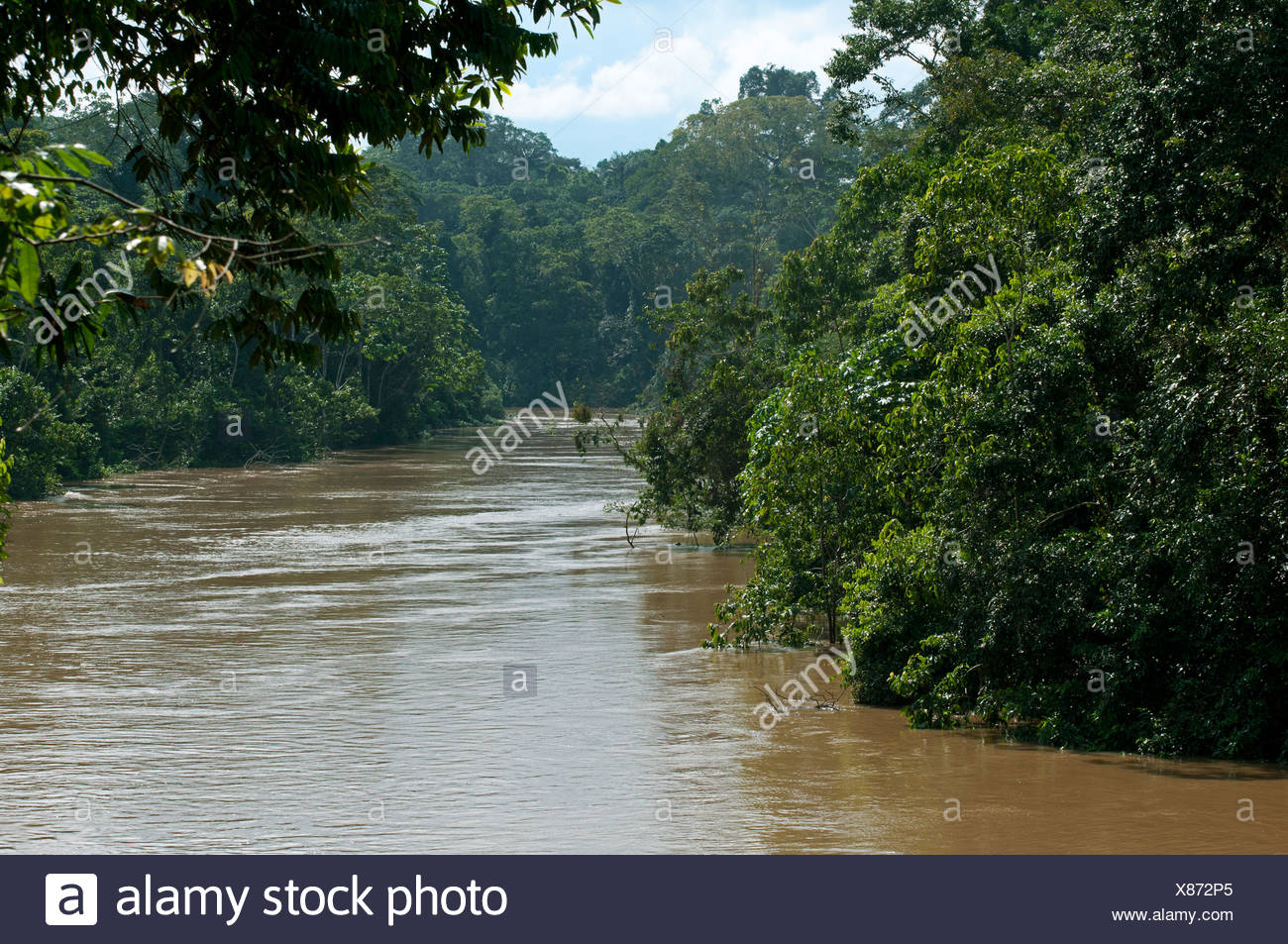 Lush rain forest vegetation at the banks of the flooded Tiputini river at the border with Yasuni National Park, Amazon basin - Stock Image