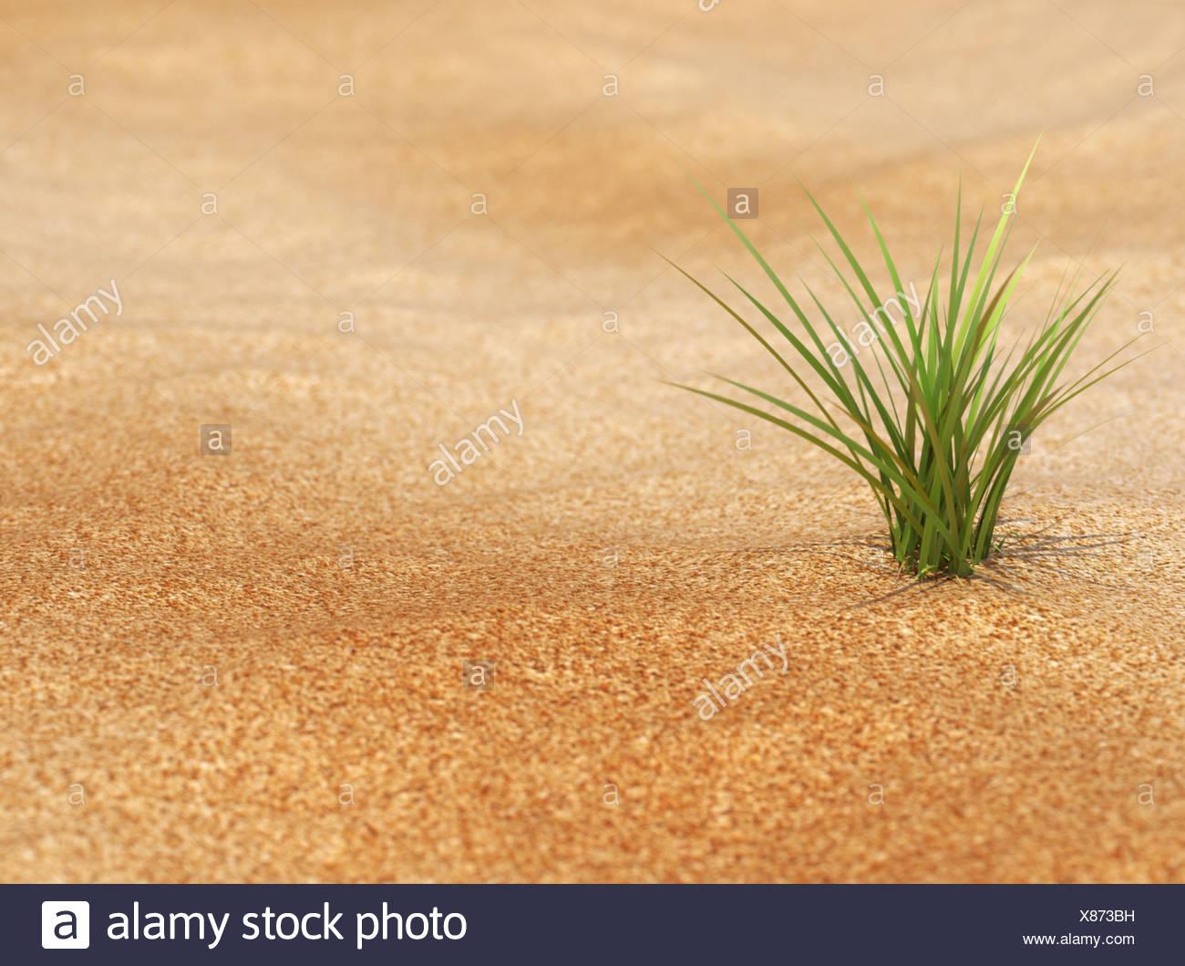 Neues Leben  - Pflanze in Wüste - Stock Image