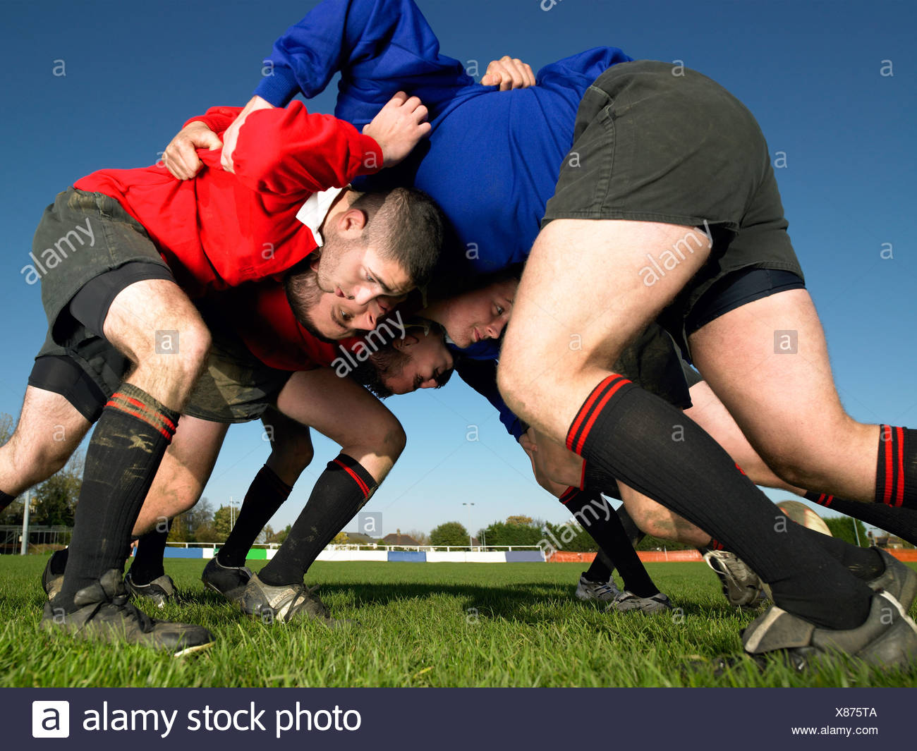 Rugby players in a scrum - Stock Image