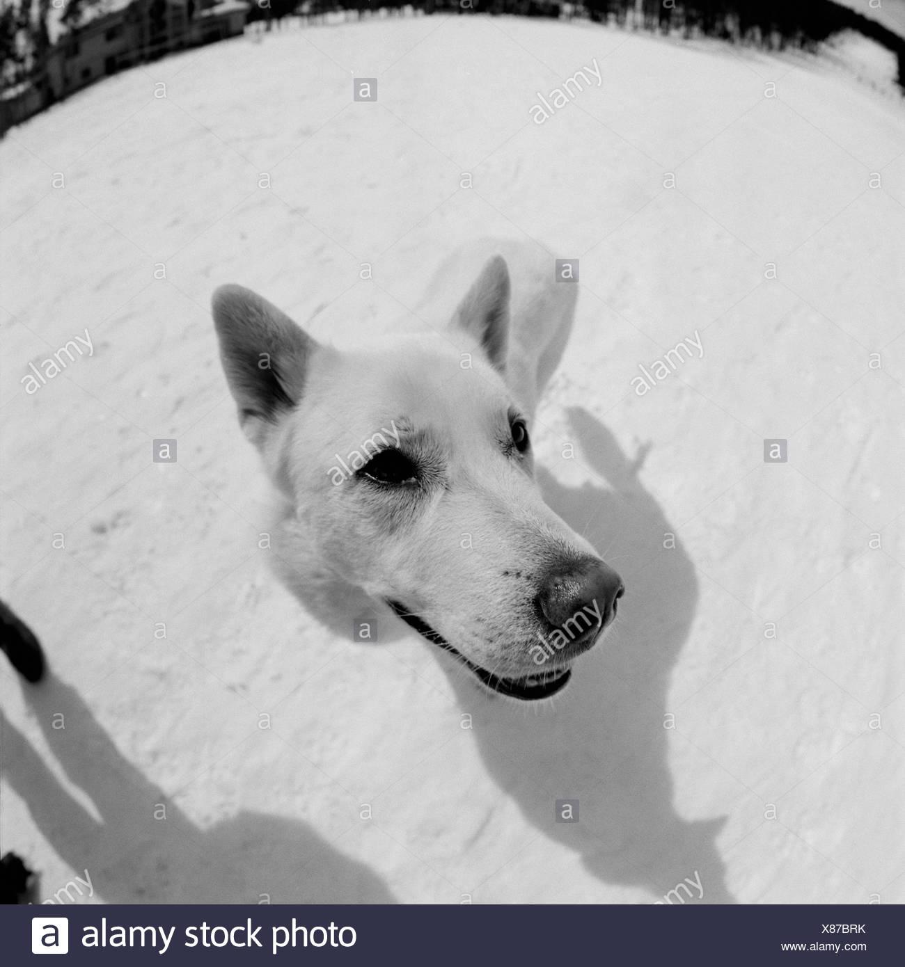 High angle view of a dog - Stock Image
