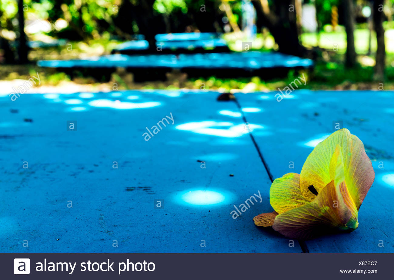 Yellow Orchid On Blue Table - Stock Image