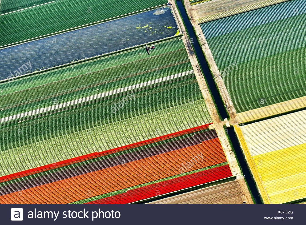 Netherlands, North Holland, Aerial view of tulip fields - Stock Image