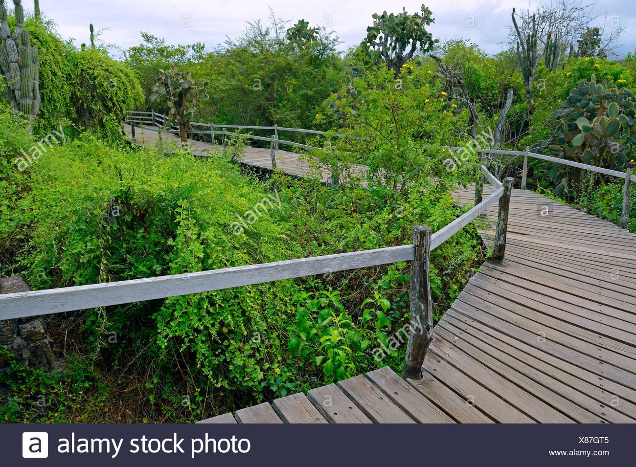 Laufsteg zwischen den Gehegen in der Darwin Station , Ecuador, Galapagos-Inseln, Santa Cruz | wooden path of the Charles Darwin  - Stock Image