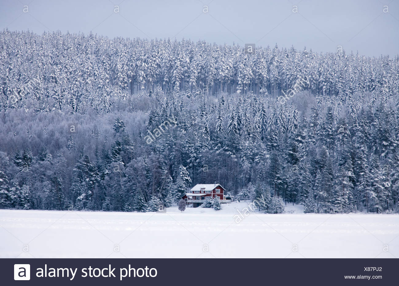Snow covered forest and house in winter - Stock Image