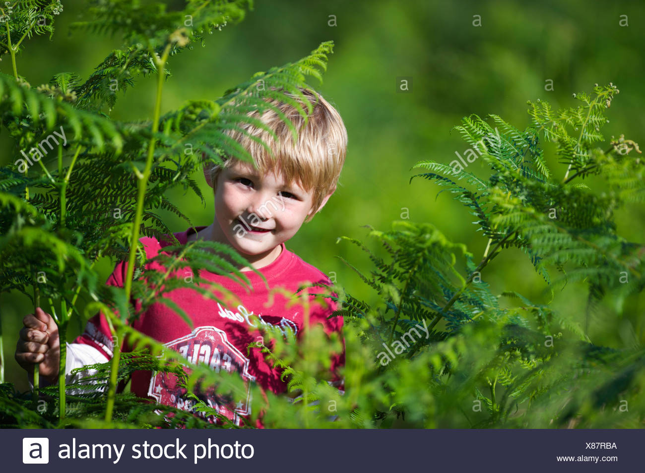 Young boy playing among bracken Norfolk summer - Stock Image
