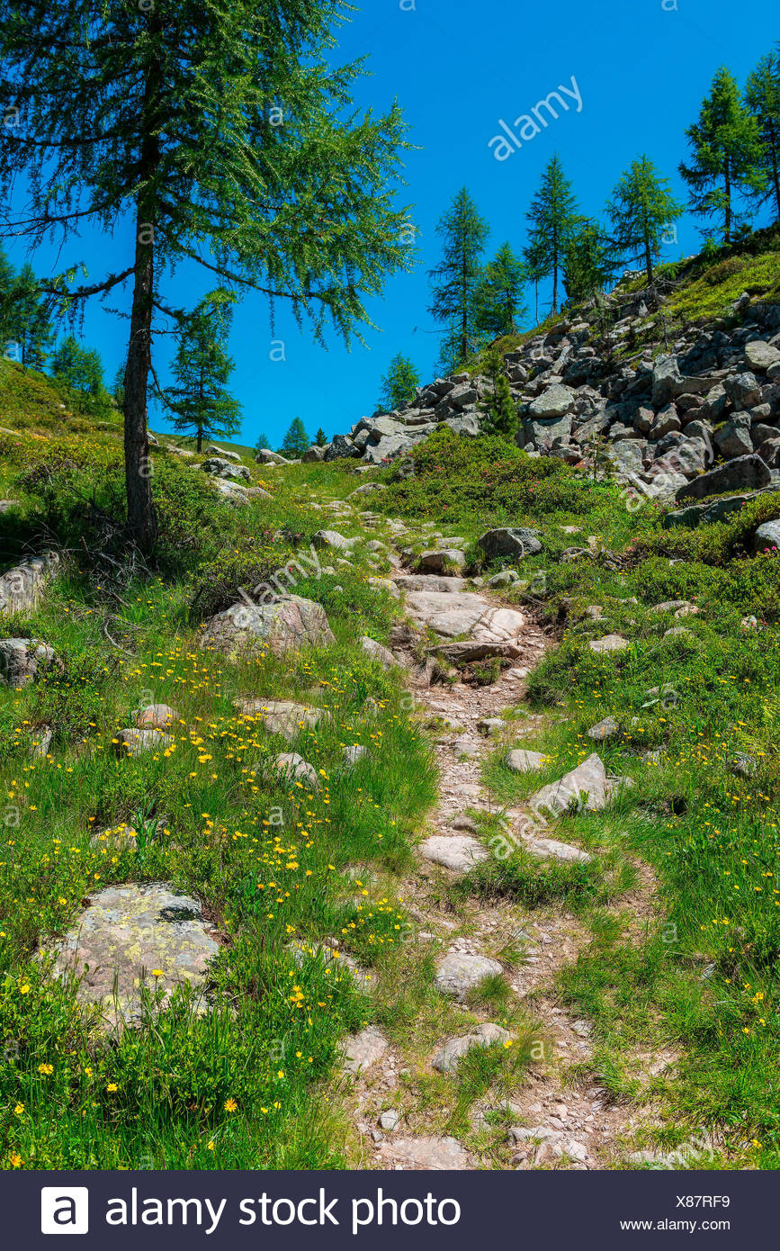 Italy, Trentino Alto Adige, San Pellegrino pass, path 628 leading to cimon. Stock Photo