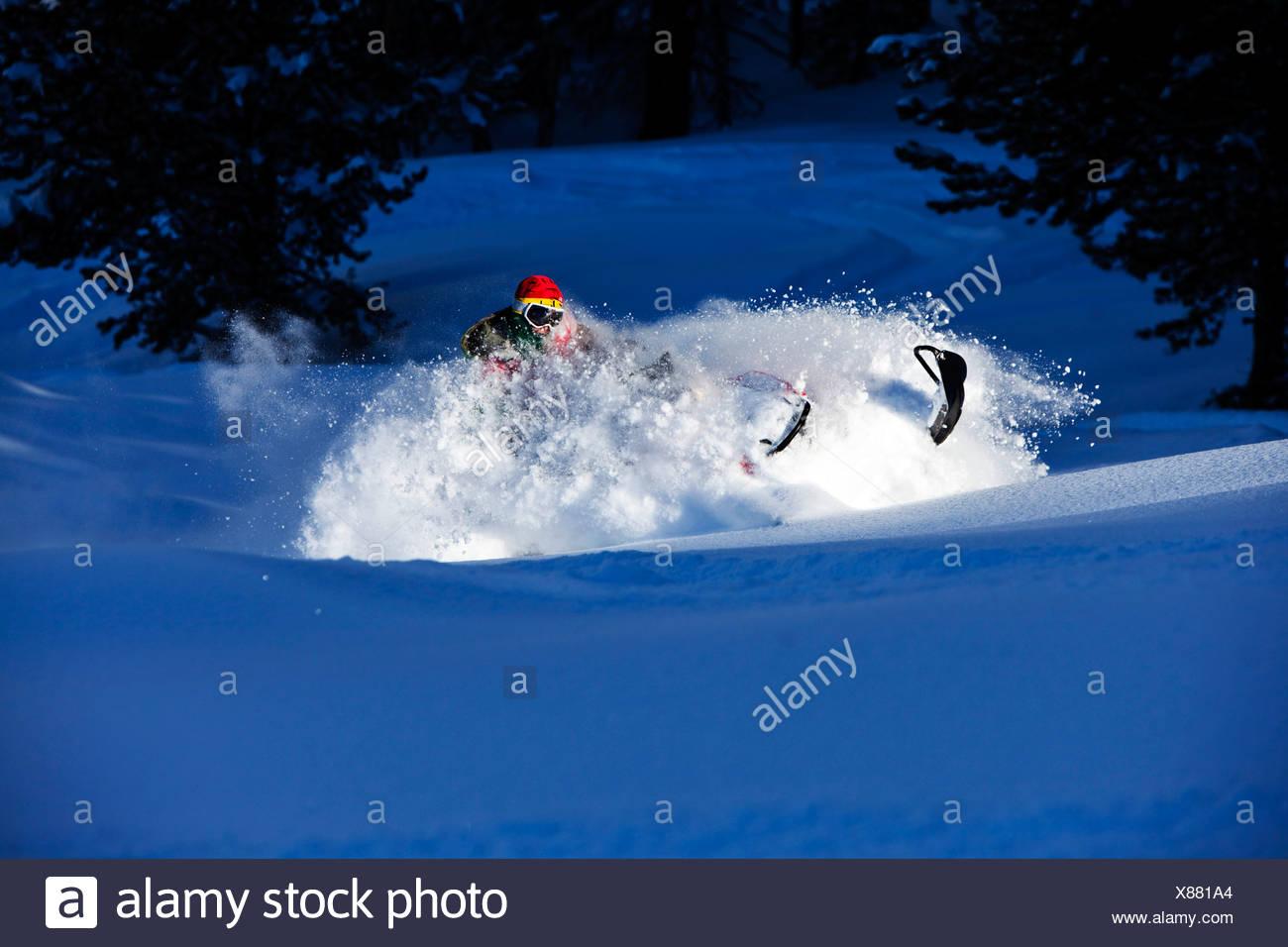 A snowmobiler boon docks powder turns in Colorado. - Stock Image