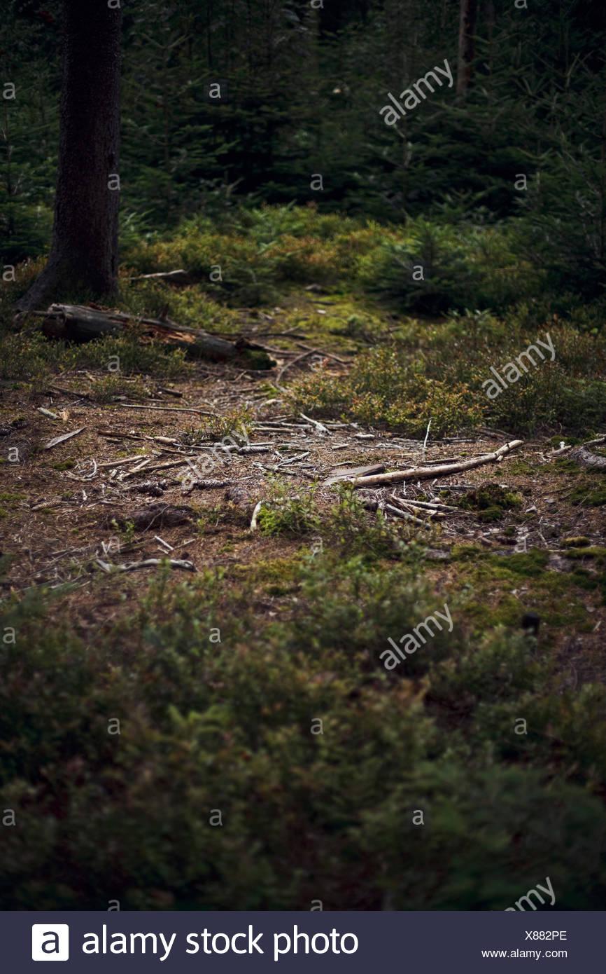 Germany, Baden-Wuerttemberg, Bad Herrenalb, forest Stock Photo ...