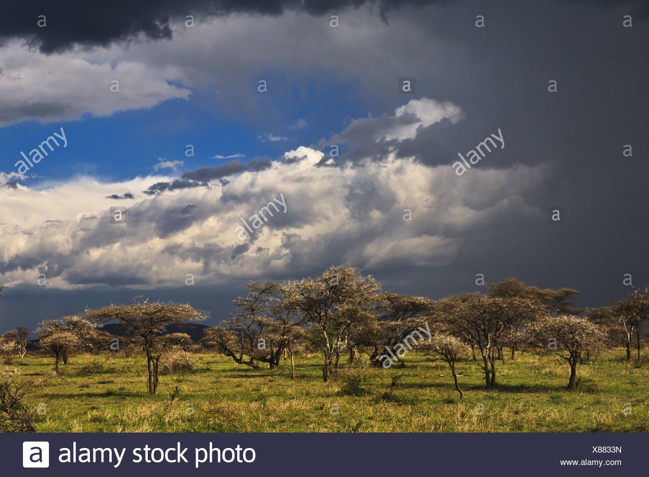 Dark clouds gather in the Serengeti, Tanzania, Serengeti NP Stock Photo