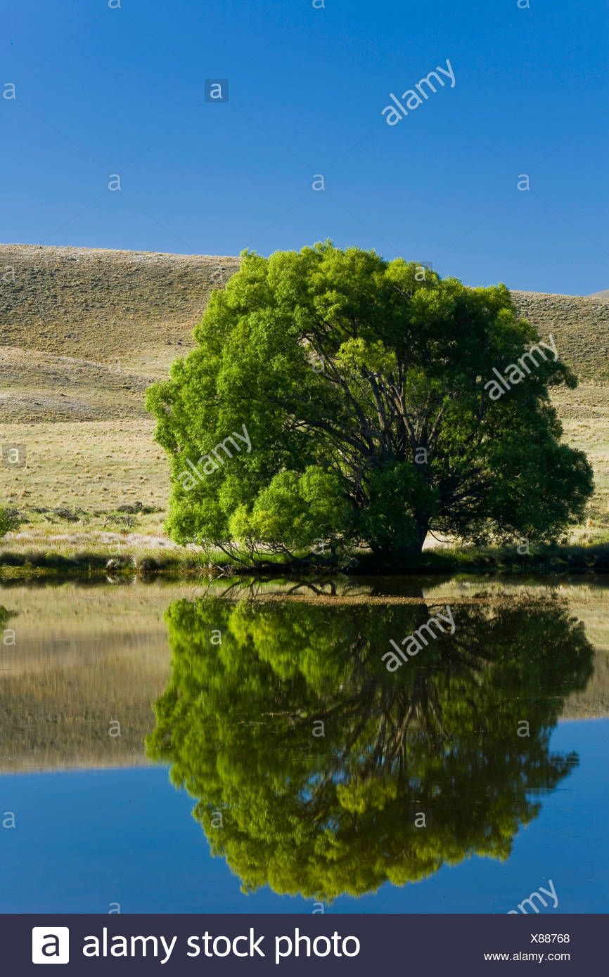 Water reflections of trees and hills on a lake, Hakatere, South Island, New Zealand - Stock Image
